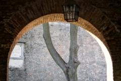 Drzewo w bramie