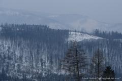 Marek Stoliński Jaki wzgórek taki lasek